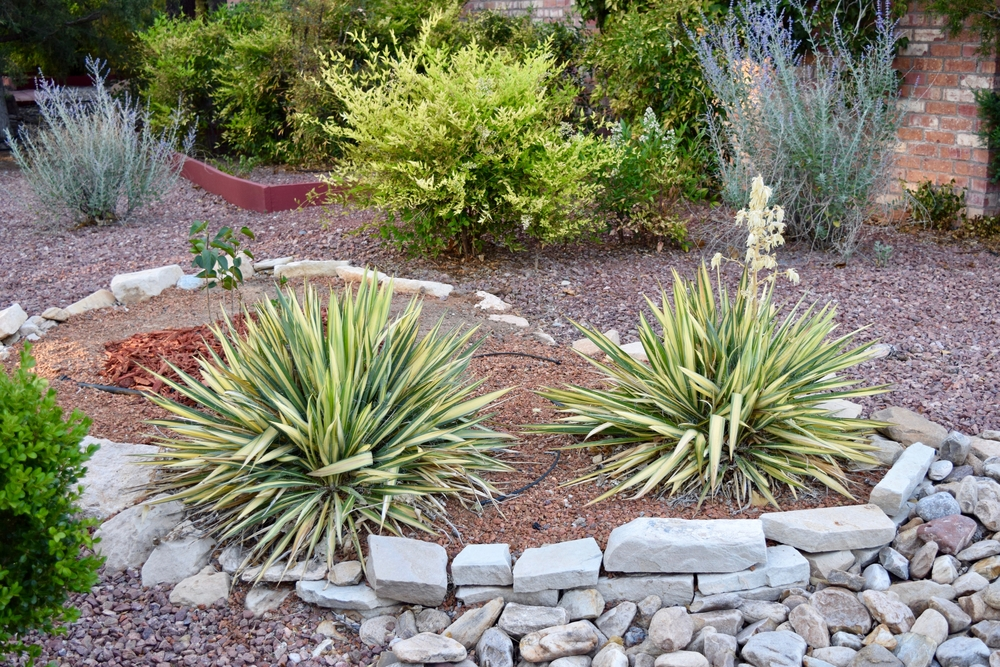 Boost Your Home's Curb Appeal While Conserving Water with Desert Landscaping Financed with CaliforniaFIRST